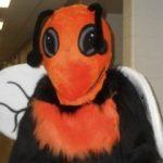 Grover The Hornet