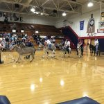 Donkey Basketball 2017-18