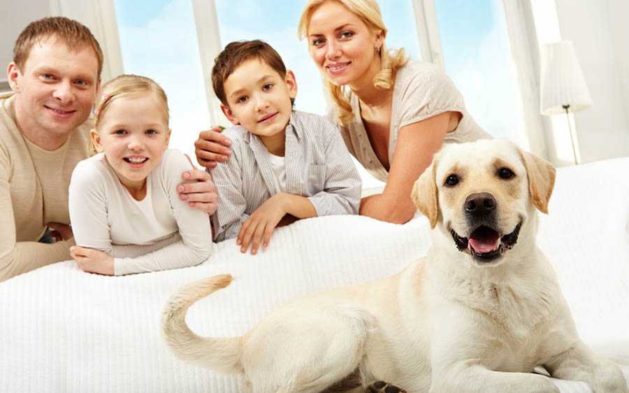 Pets in your home survey