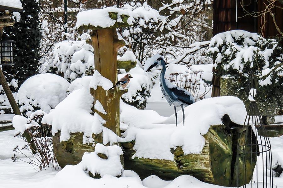 Winter Garden Damage