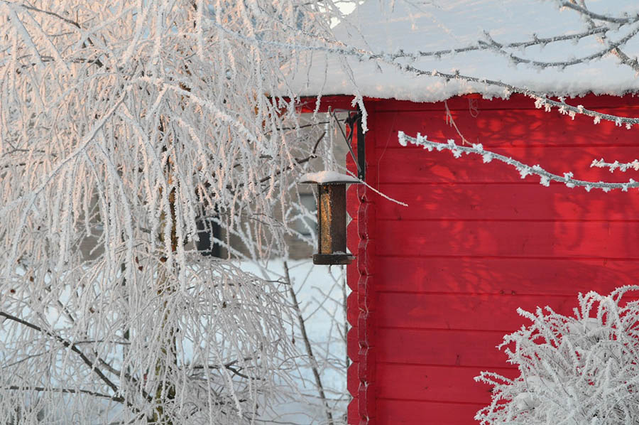 Winter Burn, Your Plants and Trees