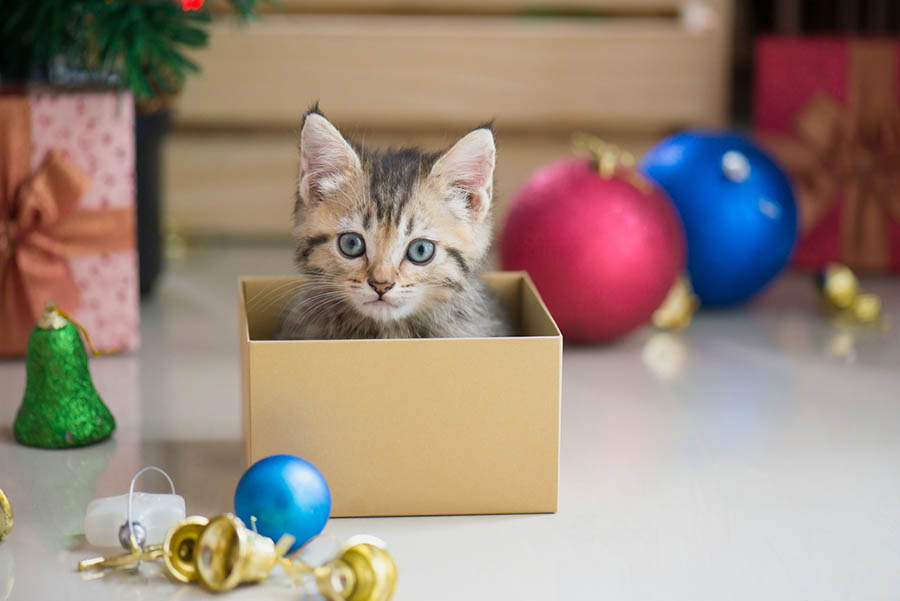 Cute kitten in a small box for Christmas