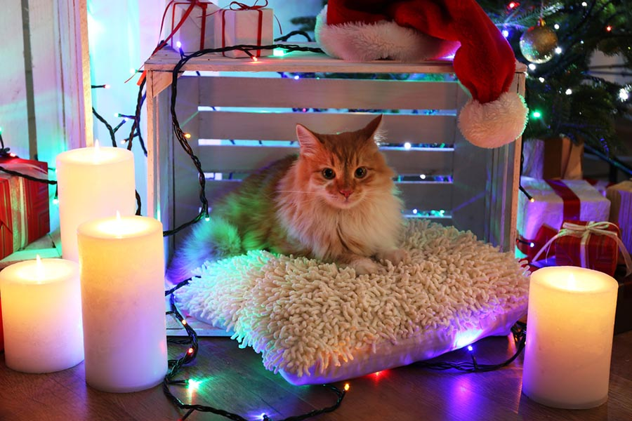 A cute cat sits on a pillow with Christmas presents, candles and ornaments around it.