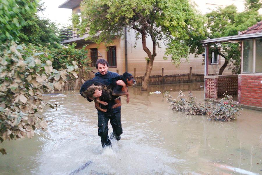 how-to-keep-pets-safe-home-flood