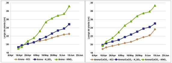 Nitrato de potasio en cítricos, se evaluaron las diferencias en árboles