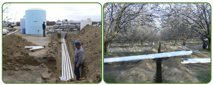 Preparing the orchard for irrigation, with double line drip (8 emitters per tree) or fan jet sprinklers with an 8 foot diameter throw (2 per tree). All treatments received 48-52 inches of irrigation scheduled according to evapotranspiration measured on site.