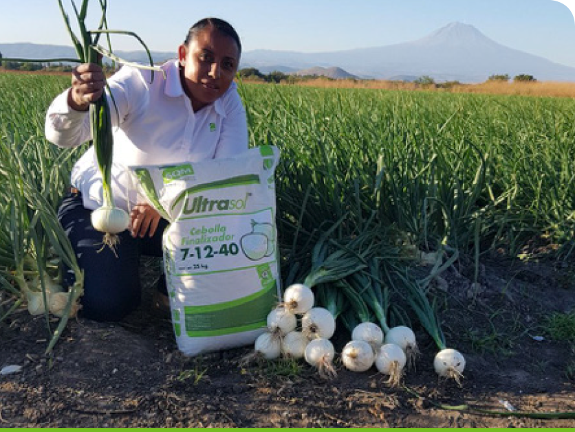 The trial was realised by Alinne Palacios, Agronomist of SQM Mexico Zone Center.