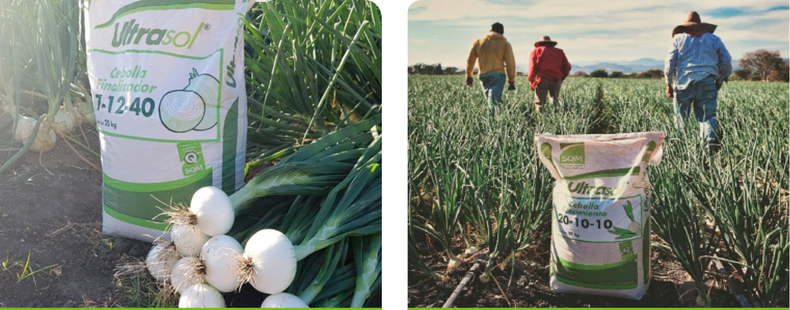 A professional photographer took pictures and recorded a video presenting the testimonial of farmer Julio Castañeda Reyes on his positive experience of collaboration with SQM and the benefits brought by use of the Ultrasol® formulas.