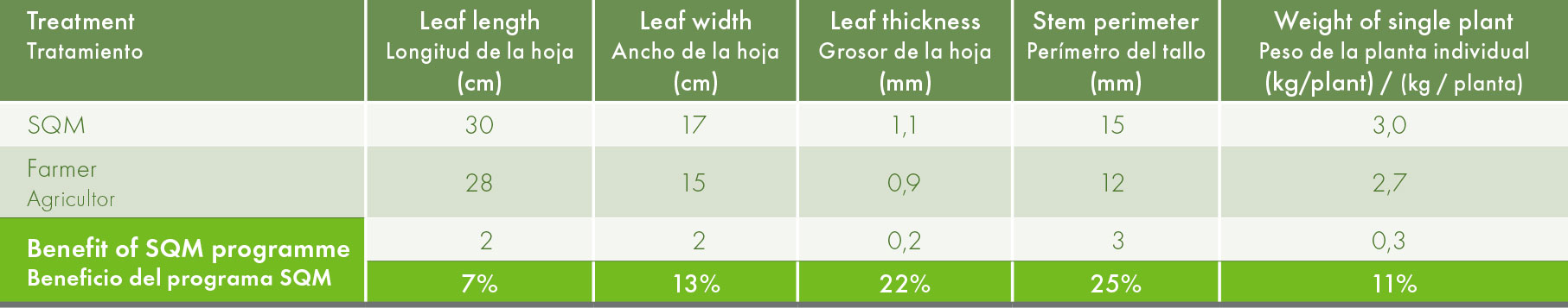 Crop development and gross ginger rhizome yield in averages of 10 plants/treatment.