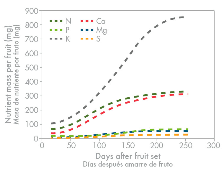 Consumption of N, P, K Ca, Mg, and S of superlative quality Valencia orange from fruit set till harvest (Oosthuyse, 2002). Potassium nitrate better enables fruit K sufficiency than potassium sulphate or potassium chloride, both in spraying and in fertigating.