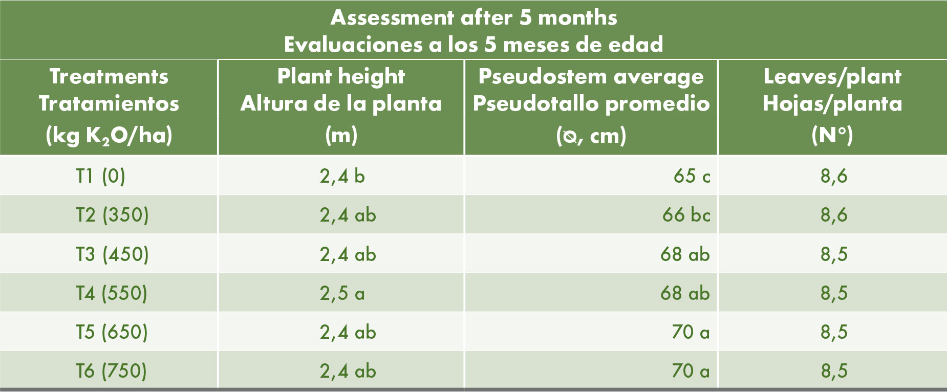 Height of the plants, diameter of pseudostem and number of leaves on 7 month old plants, 5 months after the start of the trial. Means followed by the same letters are not significantly different (Duncan, 95%).     Figure 1. The trial site at Tapachula. Qrop®KS (prilled Potassium Nitrate) is positioned as a source of N and K in fertiliser blends.  Effect of higher potassium rates on the yield and fruit quality  A number of parameters on the fruiting bunch were measured (Table 3). The size of a bunch is determined by the number of hands, number of fingers (individual banana fruits) per hand and the length of each fruit. All treatments resulted in similar finger length, within the range of good quality fruits. The number of hands per bunch and number of fruits per hand increased with higher potassium rates, with a statistically significant higher yield on those plants that had received the highest dose of potassium (750 kg K<sub>2</sub>O/ha/yr). This increase is related to the nutritional status (particularly of potassium) in the early stages of development. The average weight per bunch also increased with increasing potassium rates and differed significantly from the control at the highest rate.     Figure 2. Application of the nutrients as granular fertilisers at the start of the trial.   Table 3. Average length of fingers, number of hands and number of fingers per bunch and average weight of the bunch. Means followed by the same letters are not significantly different (Duncan, 95%).      The yield in ton per hectare (Table 4), showed an increase of 10% - 39% compared to the control. This may not be attributed solely to the increase in potassium, because of the substitution of 50% of the K<sub>2</sub>O withQrop®KS (prilled Potassium Nitrate). One of the advantages of potassium nitrate is that it consists of 100% macronutrients. The possible benefits of the other component (NO<sub>3</sub>) should be considered. In the treatment with the best results (750 kg K<sub>2</s