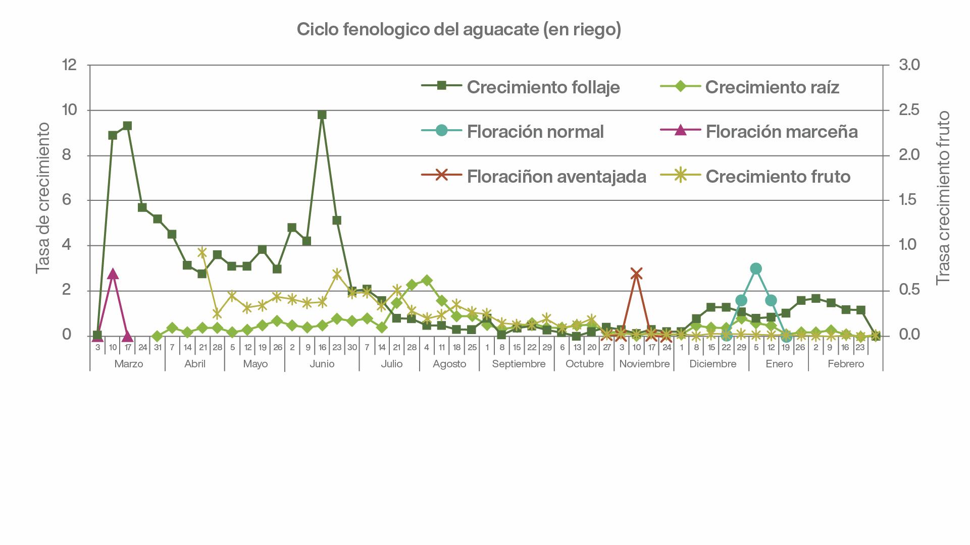 Fertirriego en aguacate, estudio del ciclo fenológico del aguacate