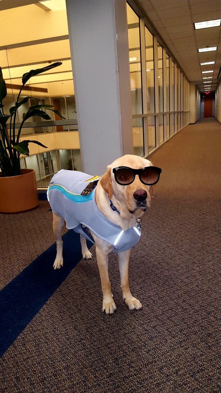 Swamp Cooler Cooling Dog Vest Evaporative Cooling