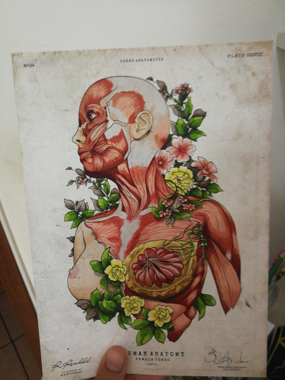 Female body anatomy art - Codex Anatomicus
