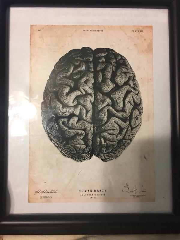 Human Brain Neuroanatomy Art Print Codex Anatomicus