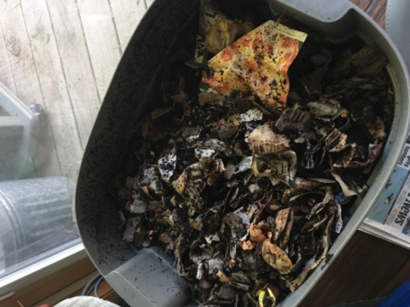 red composting worm mix