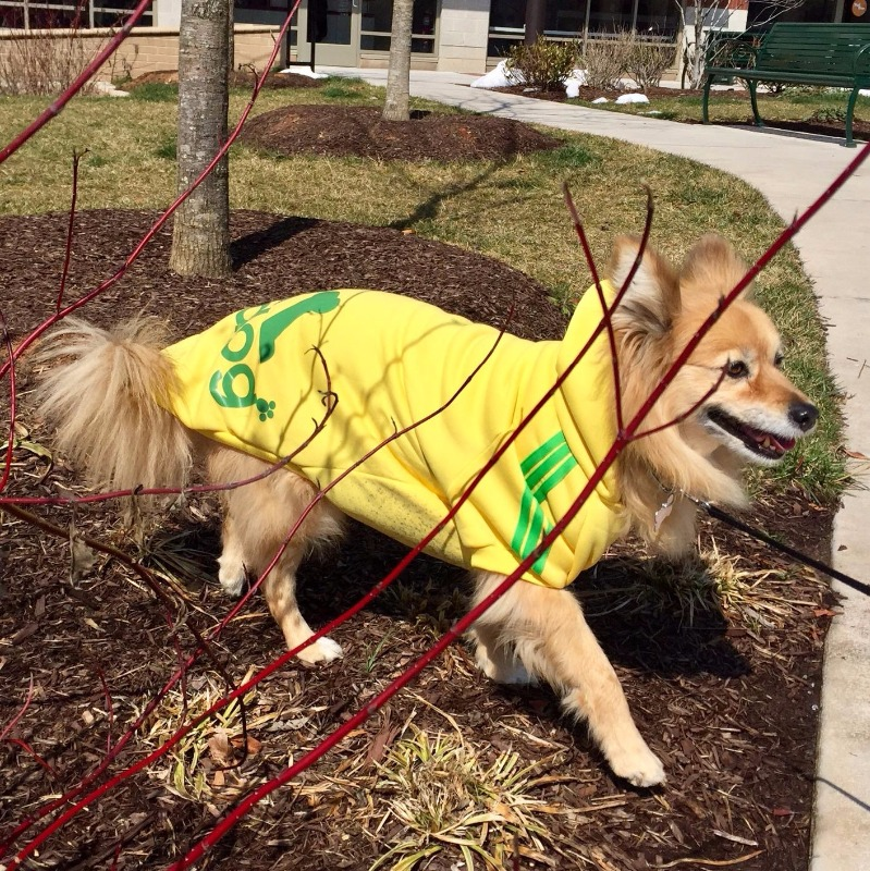 Winter Coat Jacket Clothing For Dogs Large Size Golden Retriever