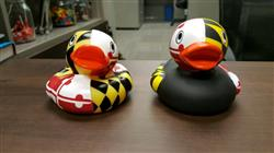 Patricia G. verified customer review of Maryland / Rubber Duckie *BUNDLE PACK*
