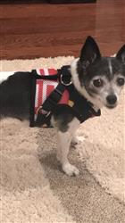Kathleen F. verified customer review of Maryland Flag / Dog Harness