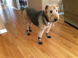 Keith M. verified customer review of Grippers™ Non Slip Dog Socks