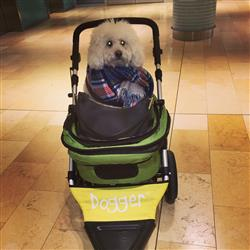 Ralyn verified customer review of Dogger™ Stroller
