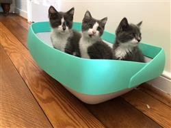 Ashleigh F. verified customer review of Luuup Litter Box