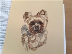 Yvette F. verified customer review of Yorkie Colored Pencil Project Kit