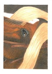 Petra S. verified customer review of CP Horses - A Complete Colored Pencil Guide to Horses