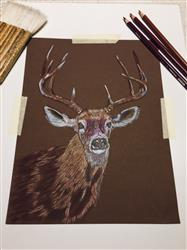 Ramona L. verified customer review of Mark Menendez: White Tail Buck Colored Pencil Tutorial