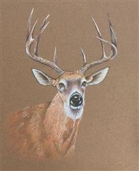 Pam C. verified customer review of Mark Menendez: White Tail Buck Colored Pencil Tutorial