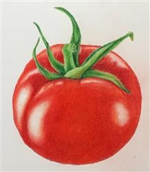 Alexis G. verified customer review of Jumpstart Level 1: Ripe Tomato in Colored Pencil