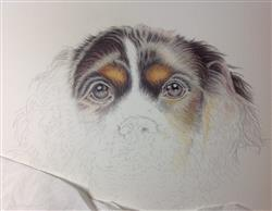 Marilyn T. verified customer review of Puppy Love: In-Depth Colored Pencil Tutorial