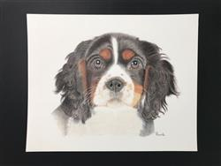 Pascale V. verified customer review of Puppy Love: In-Depth Colored Pencil Tutorial