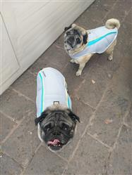 Olga R. verified customer review of Chaleco de Enfriamiento Swamp Cooler™ Azul de Ruffwear®
