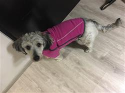 Martha R. verified customer review of Climate Changer® en Rosa Chamarra de Felpa para Perros de Ruffwear®