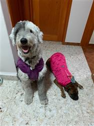 KARINA D. verified customer review of Chamarra  Reversible Impermeable para Perro Verde/Verde Bosque