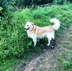 Sarai  verified customer review of Ferula Pata Trasera Para Perro Walkin' Rear Splint de Handicapped Pets