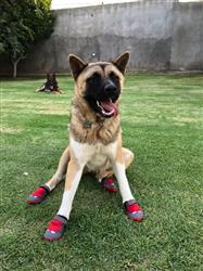 marcela m. verified customer review of Botas para Perros Grip Trex™ de Ruffwear en Rojo Grosella