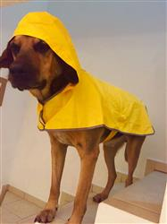 Gustavo M. verified customer review of Impermeable de Bolsillo Para Perros en Color Amarillo