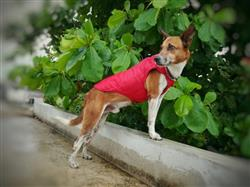 ROSSANA K. verified customer review of Chamarra  Reversible Impermeable para Perro Rojo / Gris