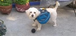 Vanessa C. verified customer review of Mochila / Alforja para Perros Approach Pack™ en Azul - Ruffwear México