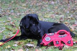 Liz M. verified customer review of Web Master™ Harness