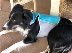Marcy M. verified customer review of Jet Stream™ Cooling Vest