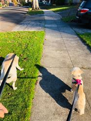 Chelsea T. verified customer review of Roamer™ Leash