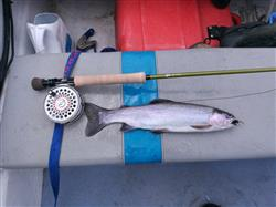 Andrew C. verified customer review of 6wt - 686 FastGlass® Fly Rod Kit - Blem