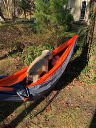 Jack M. verified customer review of Double Lightweight Camping Hammock & Tree Straps