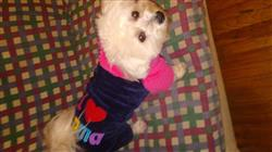 Terrell T. verified customer review of I Love Mama/Papa Winter Dog Clothes Hoodie