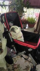 Martine C. verified customer review of PET ROVER™ Premium Stroller for Small/Medium/Large Dogs, Cats and Pets (Red)