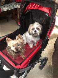 Mary C. verified customer review of PET ROVER™ Premium Stroller for Small/Medium/Large Dogs, Cats and Pets (Red)