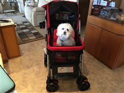 Barbra d. verified customer review of PET ROVER™ Premium Stroller for Small/Medium/Large Dogs, Cats and Pets (Red)
